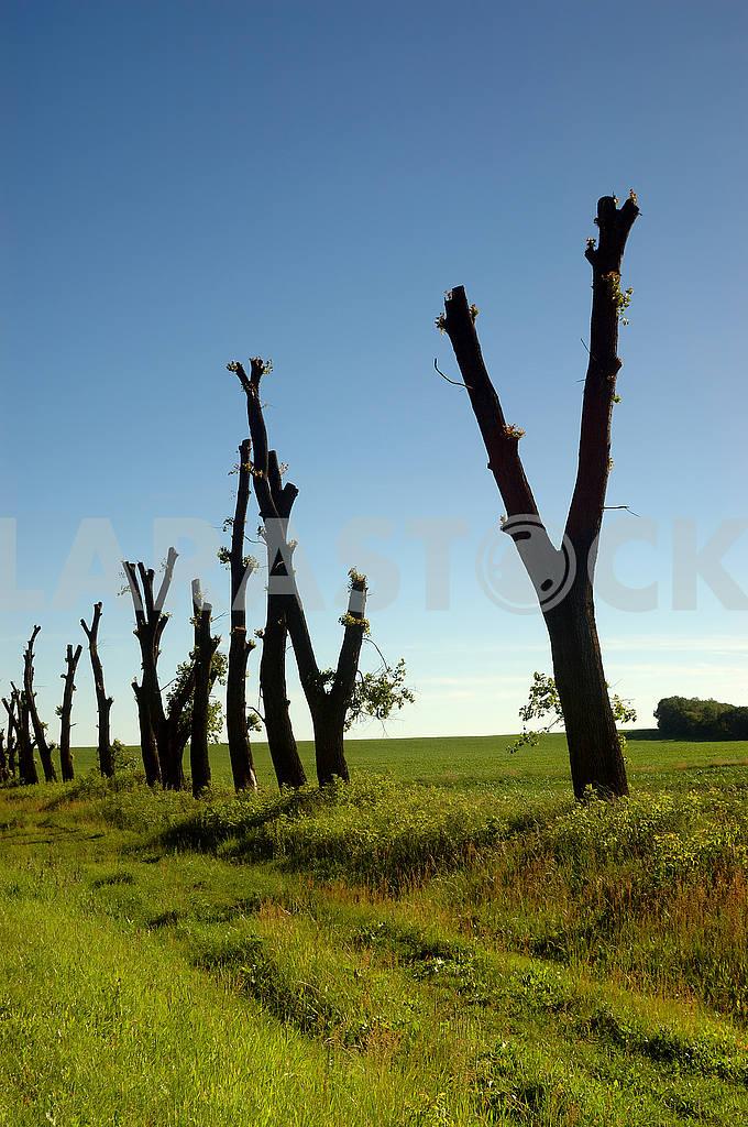 Деревья после стрижки — Изображение 53868