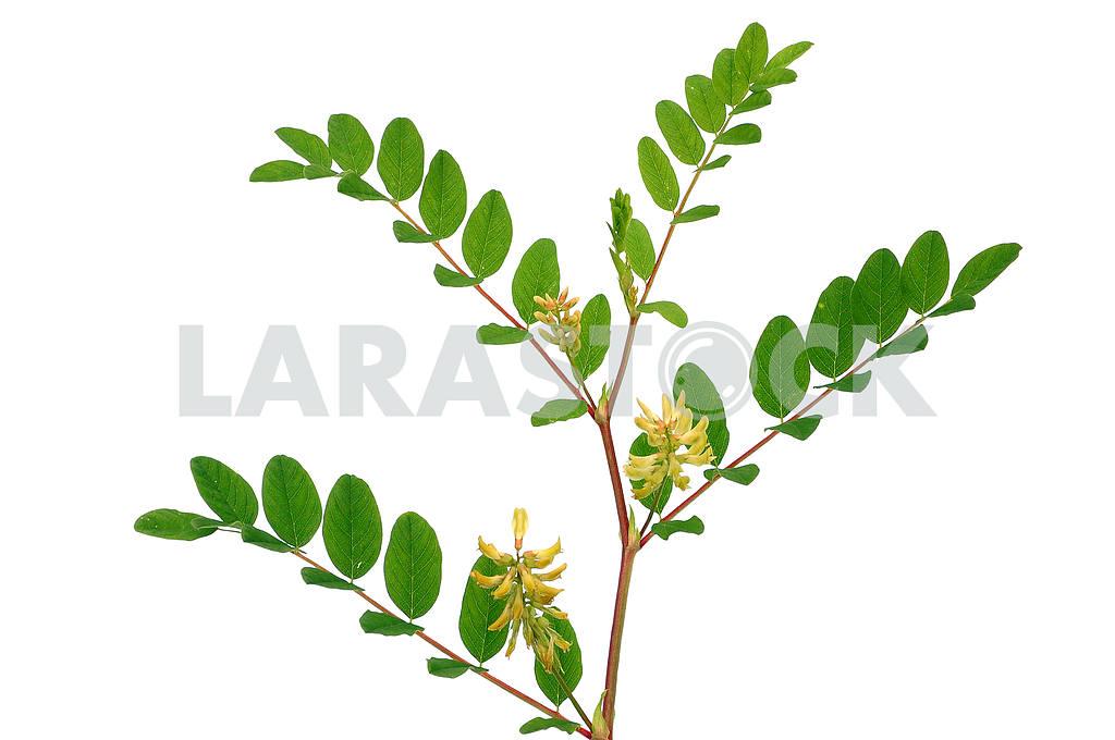 Flowering plant — Image 53877