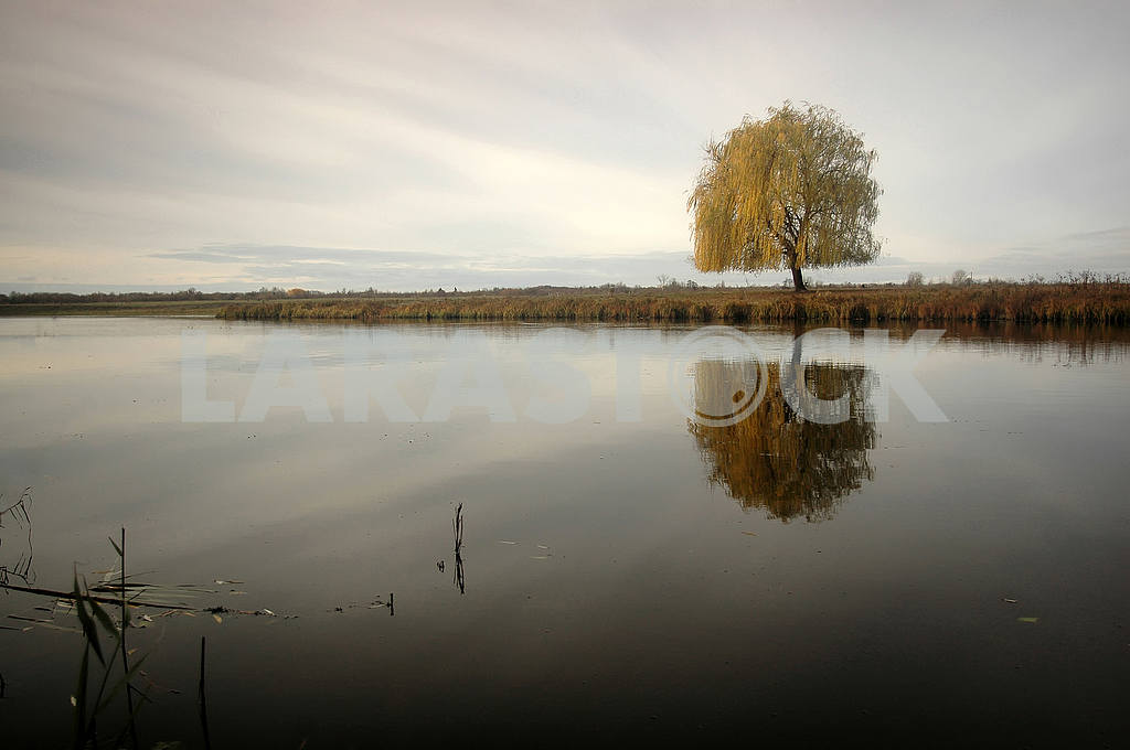 Lonely willow tree by the river — Image 53882