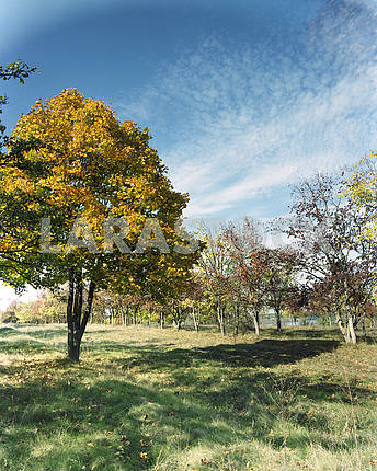 of bright autumn tree