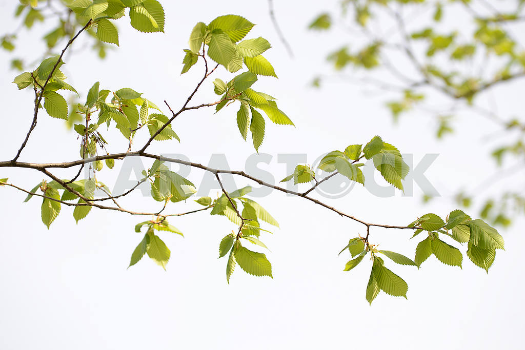 Bright sunny tree branch — Image 53923