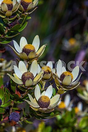 Flowers in Zanzibar