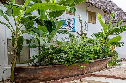 Деревья и кусты на Занзибаре,Танзания