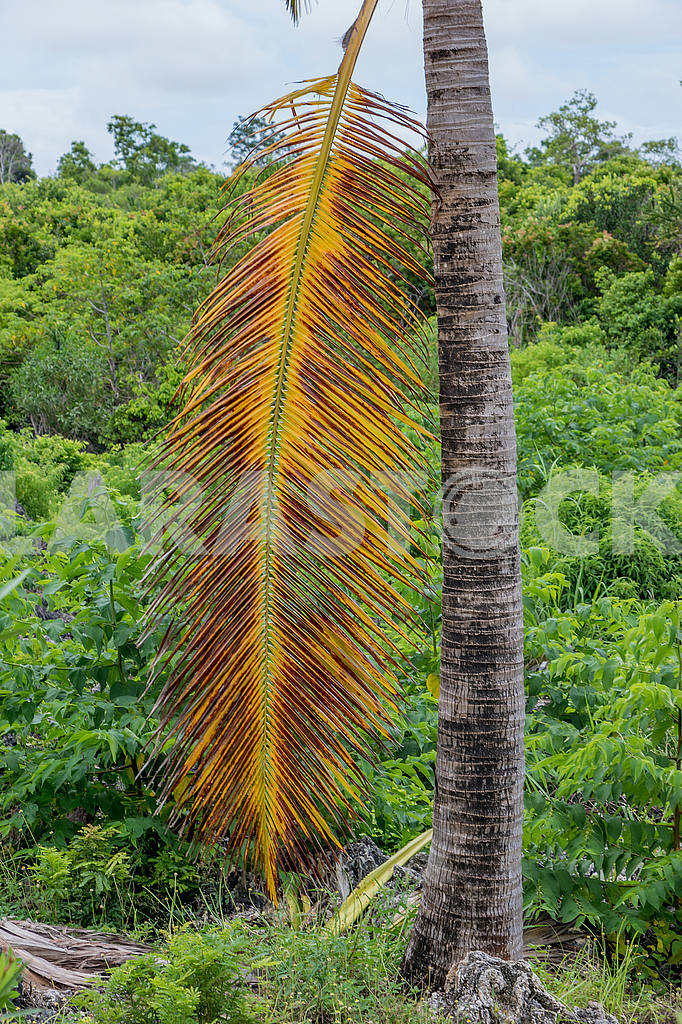 Dry branch of a palm — Image 54106