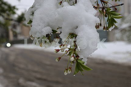 Snowfall in the Dnieper