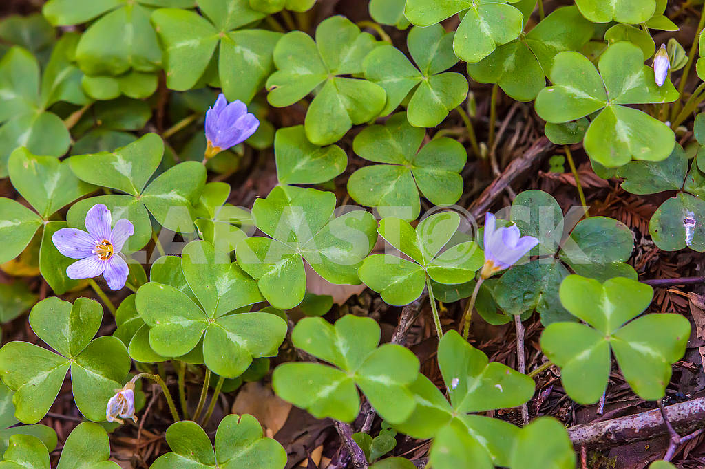 Alpine flowers — Image 54935