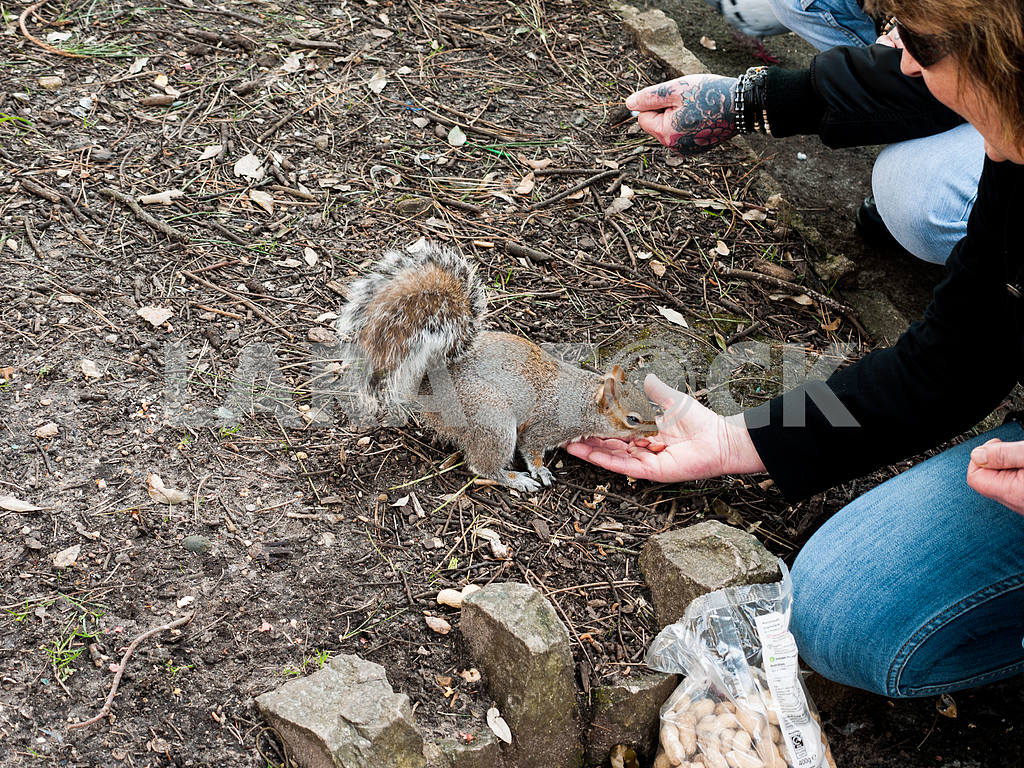 Woman Feeding a Squirrel — Image 55134