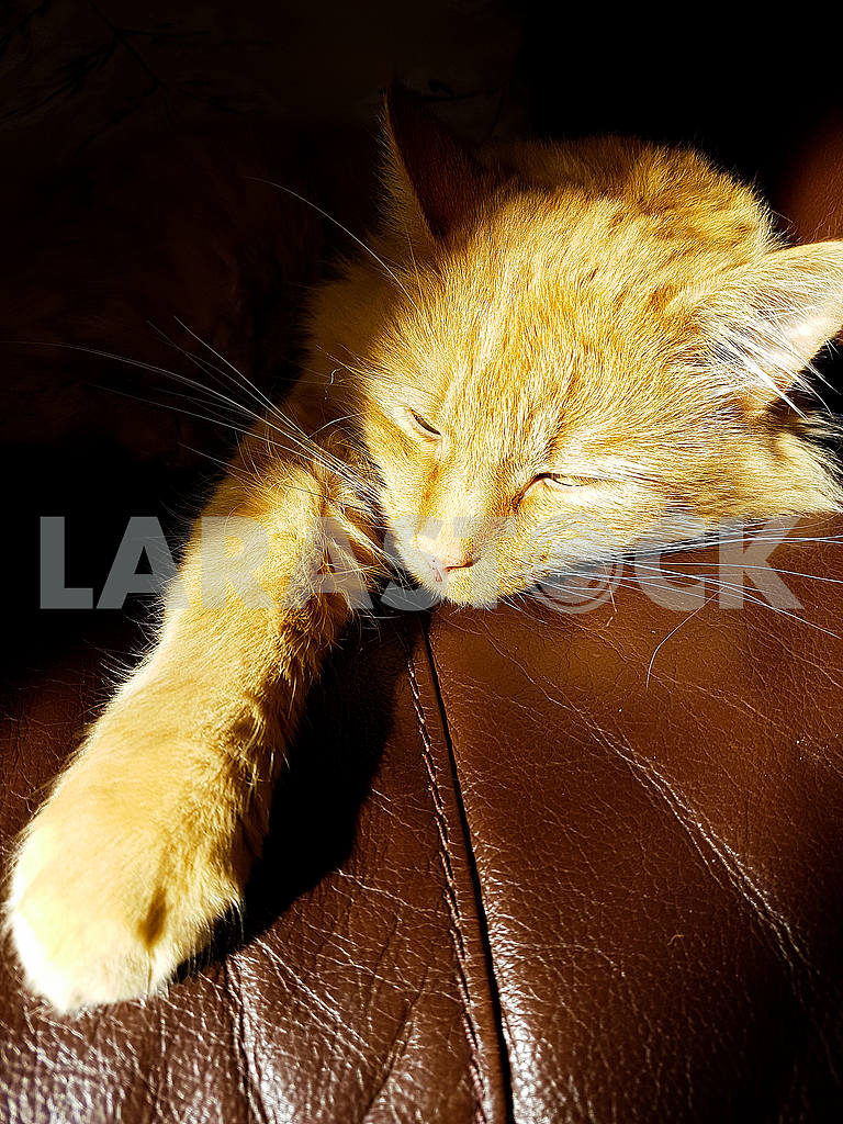 Ginger Cat Lying in the Sun — Image 55157