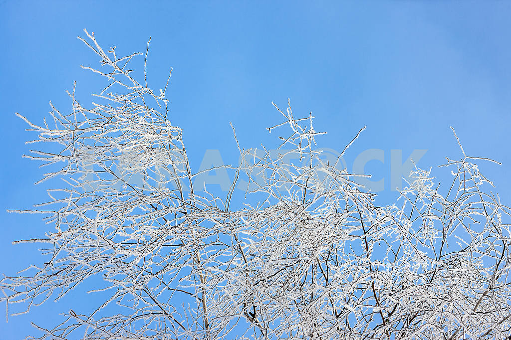 The branches of birch covered with hoarfrost — Image 55970