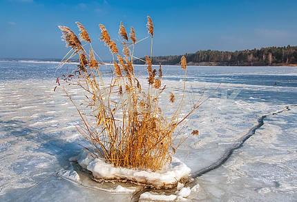 Зимний пейзаж с кустом тростника