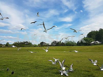 Стая птиц
