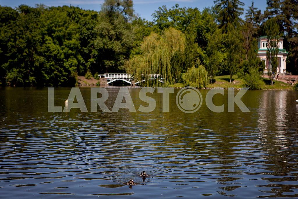 Park Sofiyivka — Image 56824