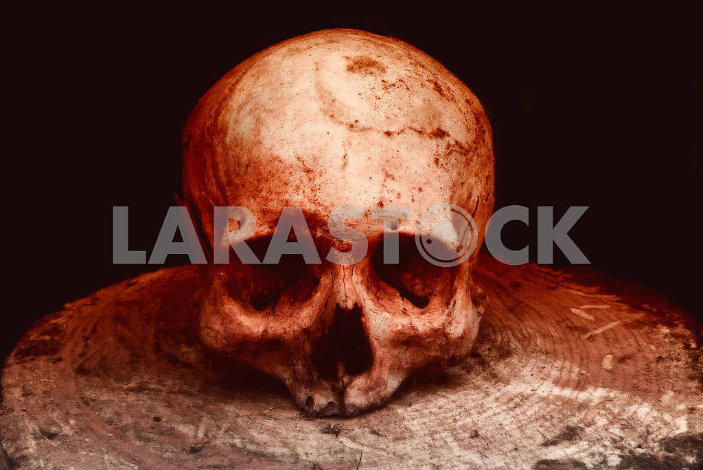 Real human skull on a stump on a black and red isolated background. — Image 57127
