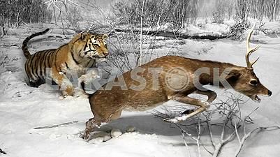 Мир дикой природы,уникальные животные.