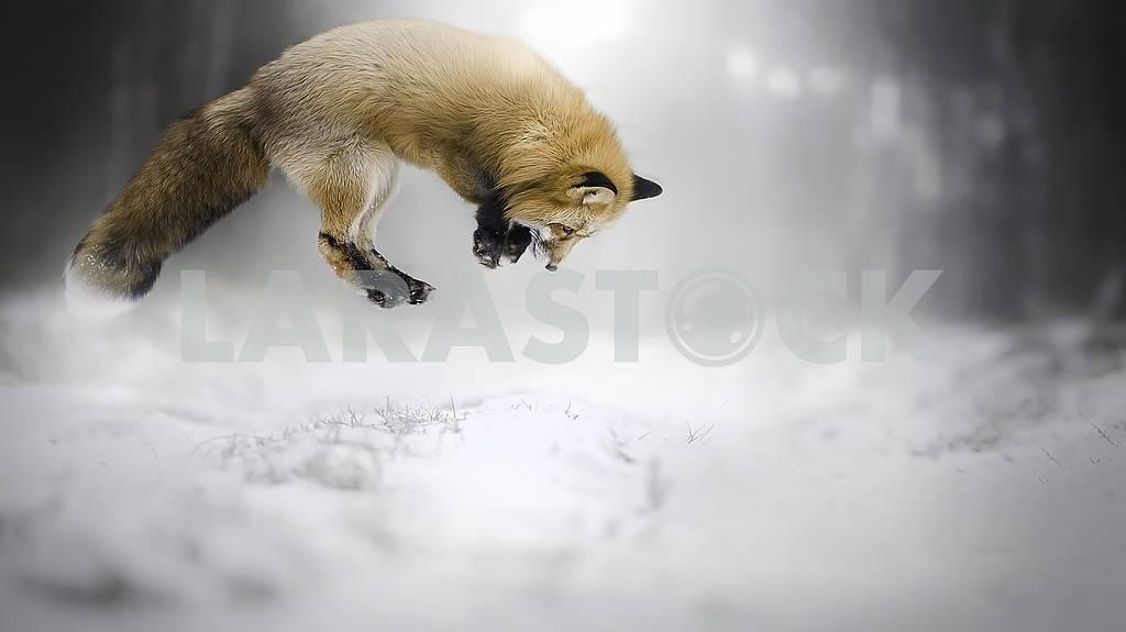 A world of wildlife, unique animals. — Image 58882