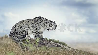 A world of wildlife, unique animals.