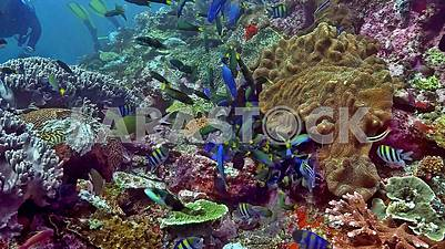 Landscapes, nature, parks, underwater world, all this is not the real beauty of our planet.