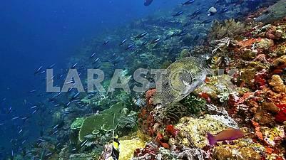 Пейзажи,природа,парки,подводный мир, все это не реалная красота нашей планеты.