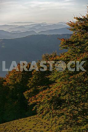 Autumn in Transcarpathia