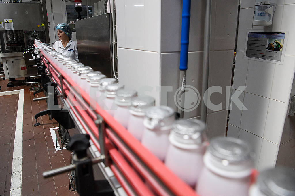 Dairy production — Image 61283