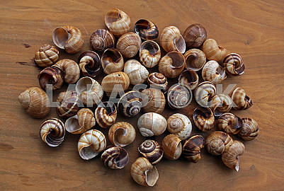 Spiral sea shells