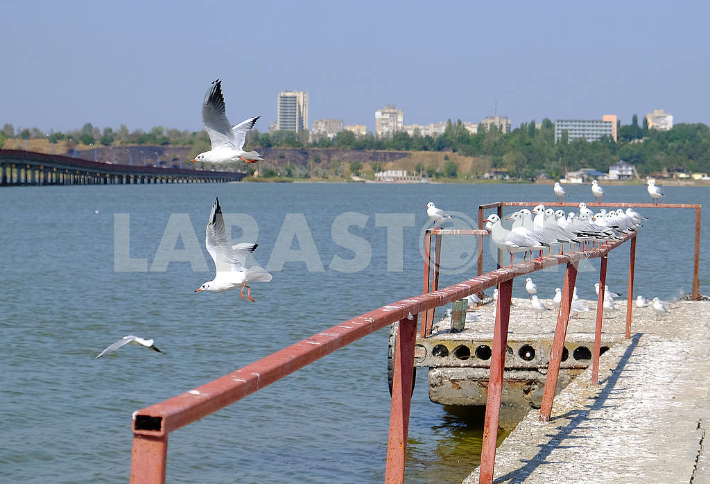 Seagulls on the pier — Image 62022