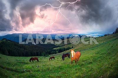 Лошадей в туманных Карпатах