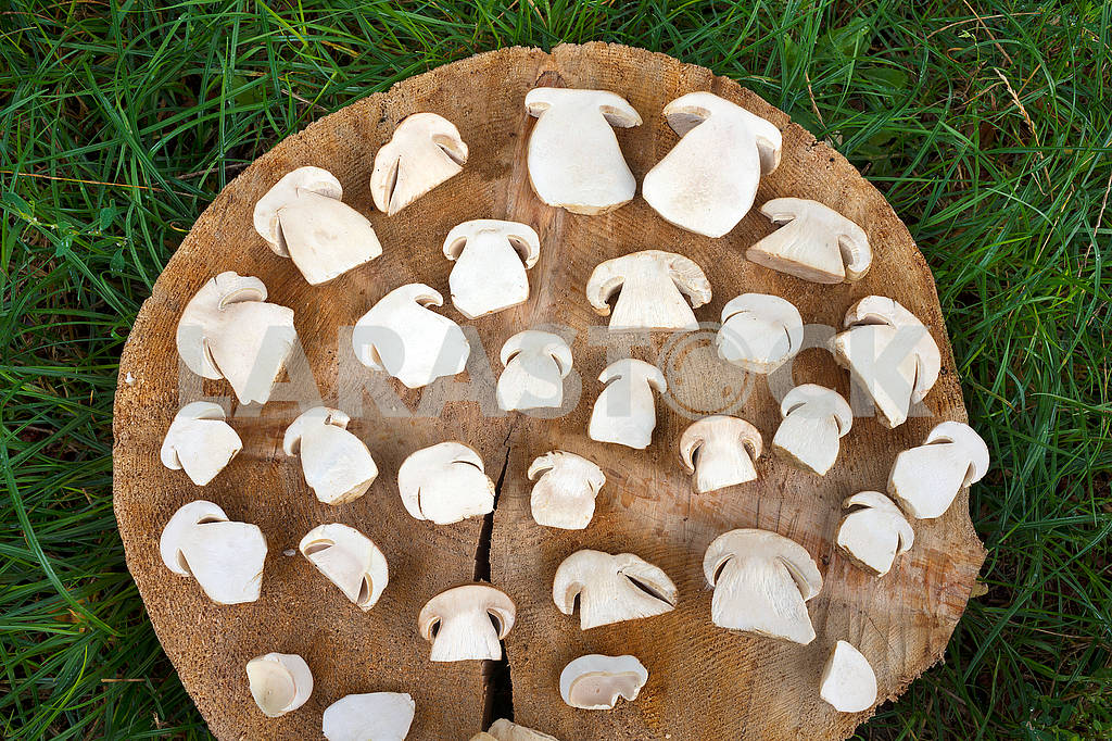 Sliced white mushrooms — Image 62329