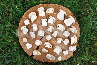Нарезанные белые грибы