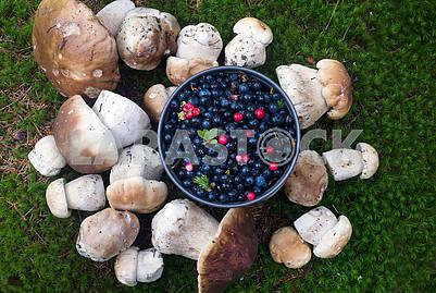 stump with mushrooms