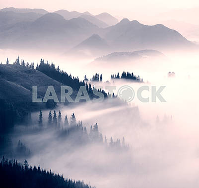 picturesque forest in the fog