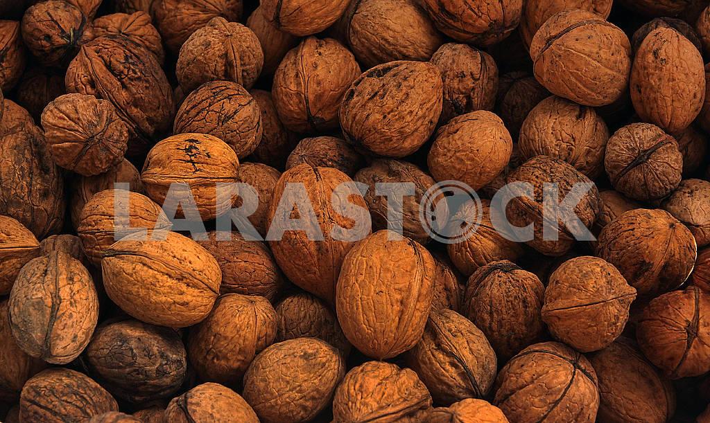 Walnuts in a shel — Image 62733