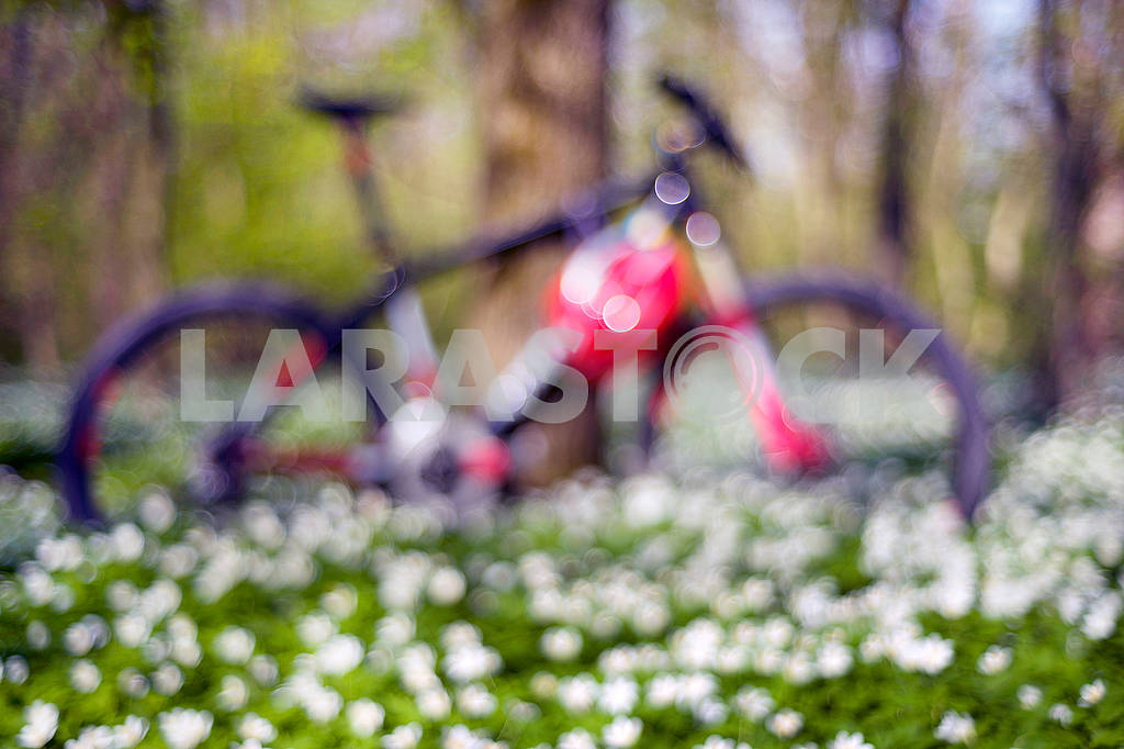 Anemones and bike — Image 62762