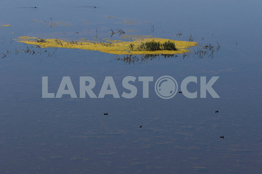 Vegetation and ducks on the river Liahoe — Image 62902