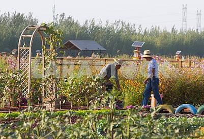 Работники в колхозе