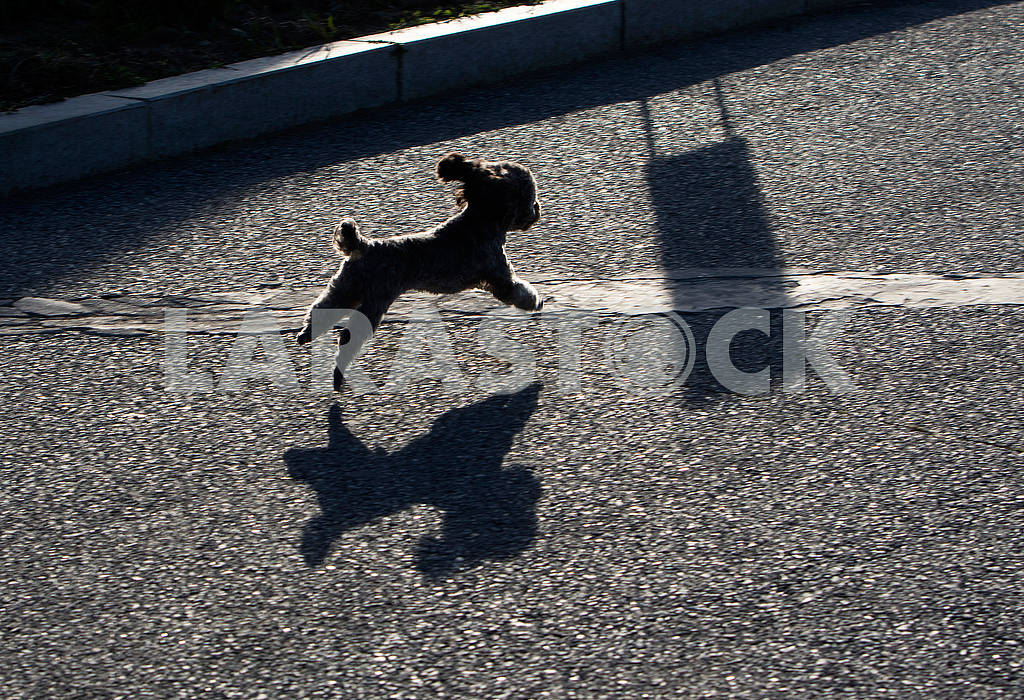 A dog is running down the street — Image 63197