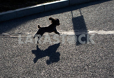 A dog is running down the street