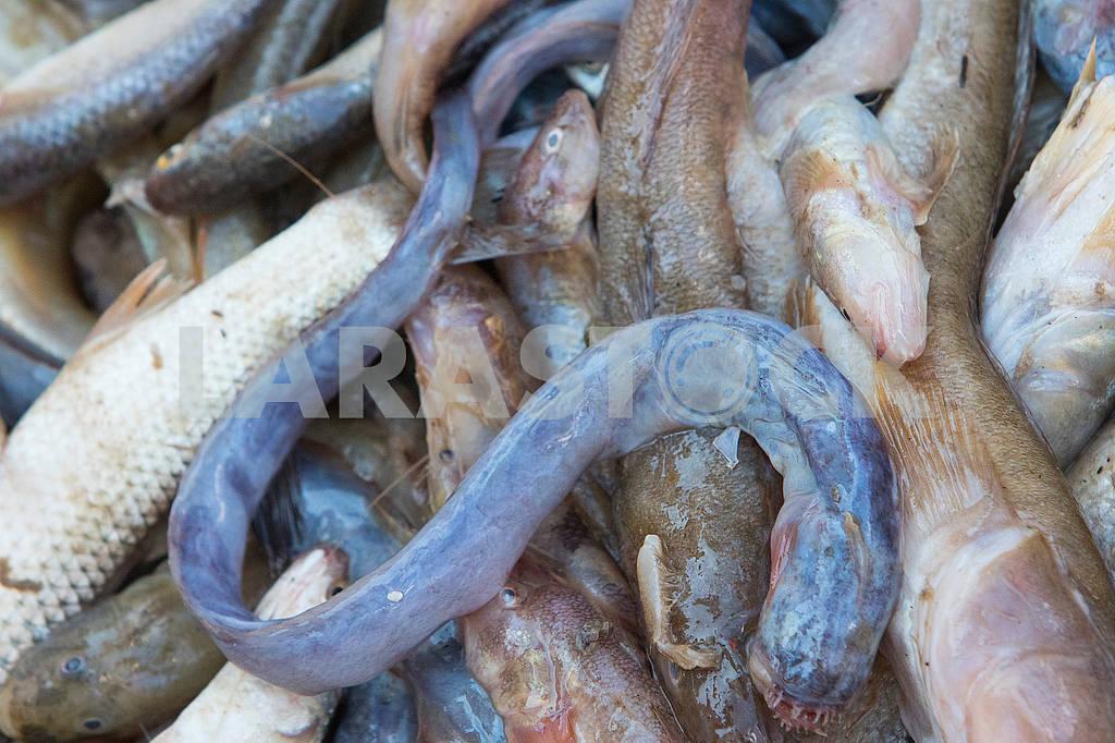 Улов рыбака — Изображение 63201