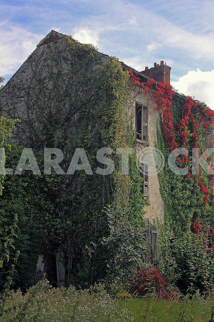 The old abandoned house is overgrown ivy — Image 63337