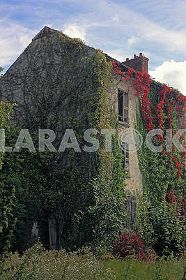 The old abandoned house is overgrown ivy