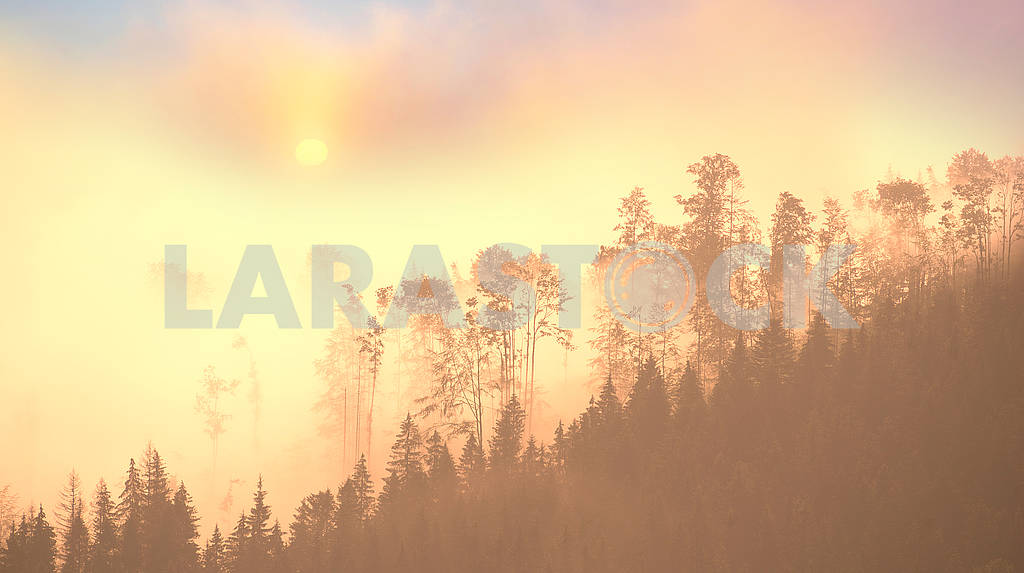 Picturesque forest in the fog — Image 63353