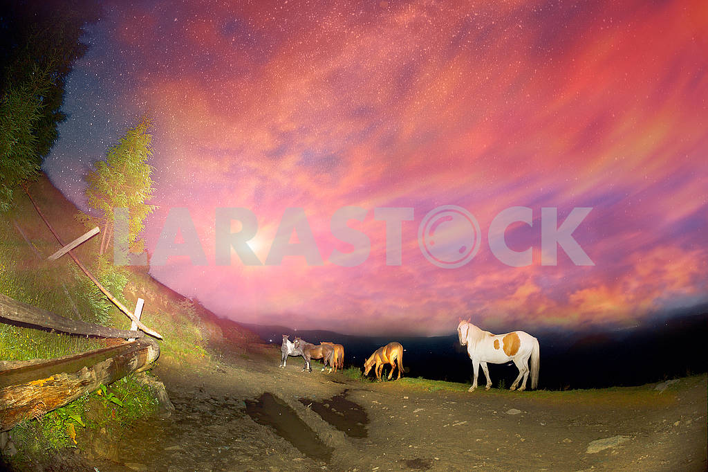 Horses in the night mountains — Image 63454