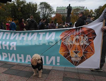 Собакка на фоне плаката