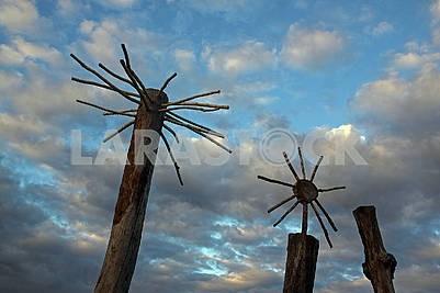 Three cut trees