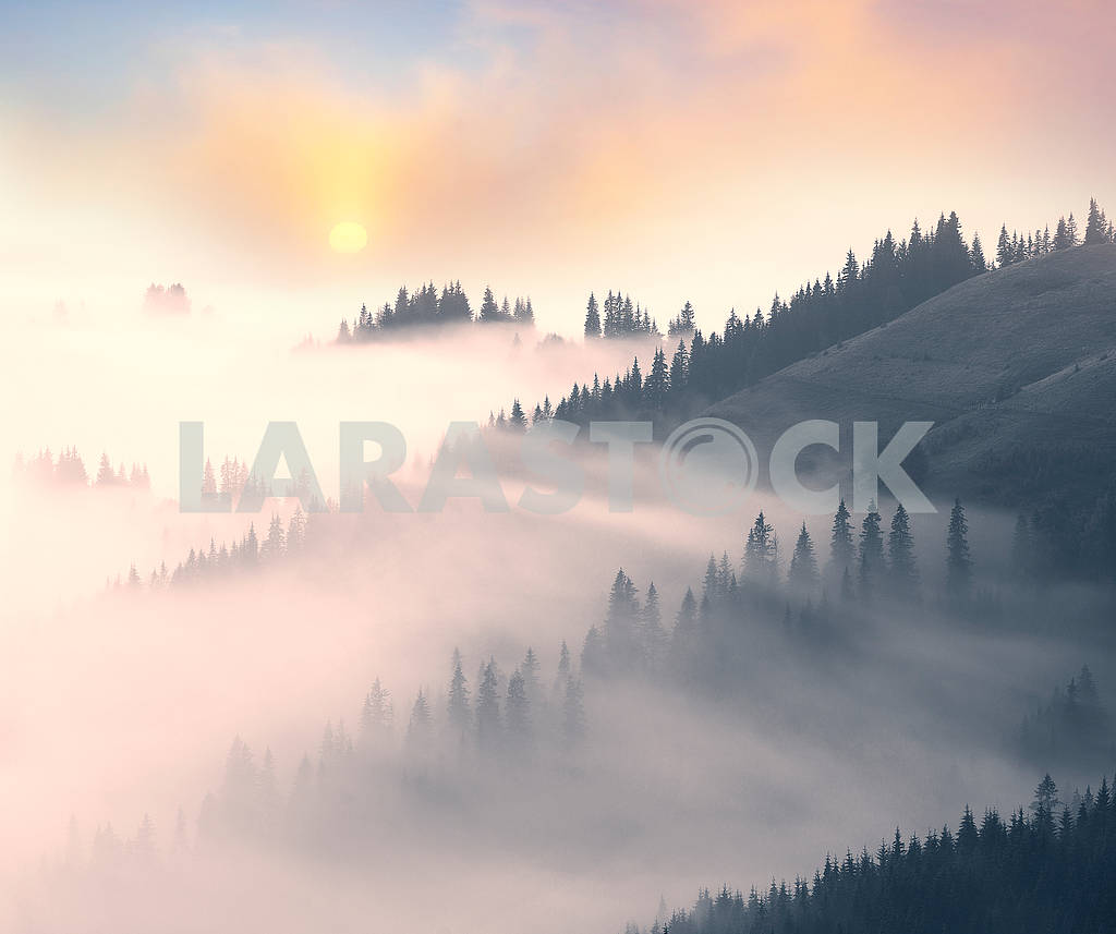 Picturesque forest in the fog — Image 63572