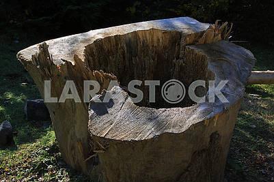 Старый пень срезанного дерева