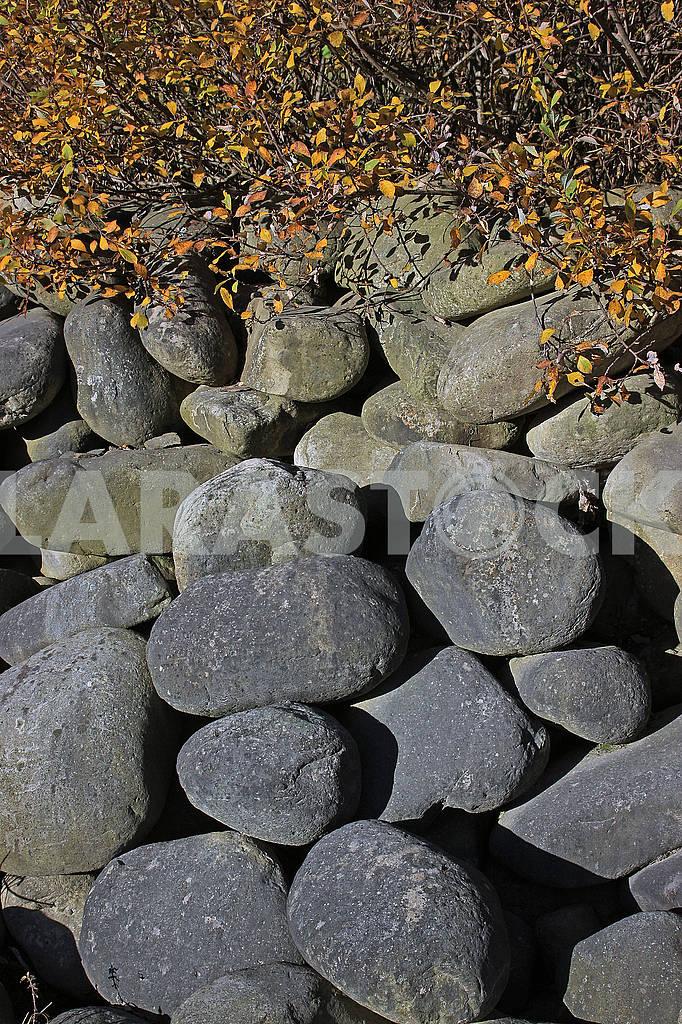Large stones under the bush — Image 63904
