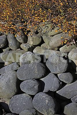 Large stones under the bush