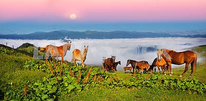 Horses in the foggy Carpathians