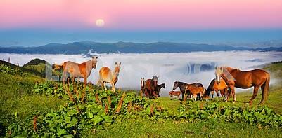Лошади в туманных Карпатах